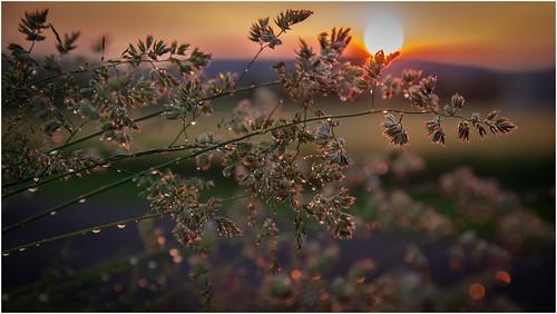 sunset clouds germany landscape deutschland thüringen sonnenuntergang dof cloudy wolken thuringia sonnenstrahlen eic getreide landkreis bewölkt eichsfeld canoneos5dmarkii ef2470f28liiusm