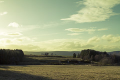 Dusk in field