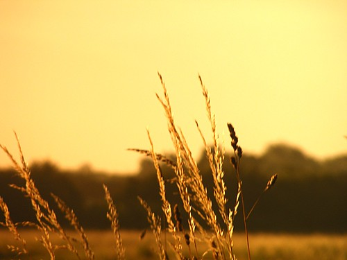city uk trees wild sky plants tree grass golden shadows sunny kingston shade fields hull rockford file8