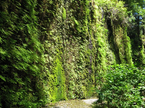 Fern Canyon 12