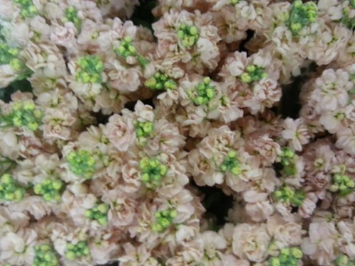 Nine Elms New Covent Garden Flower market