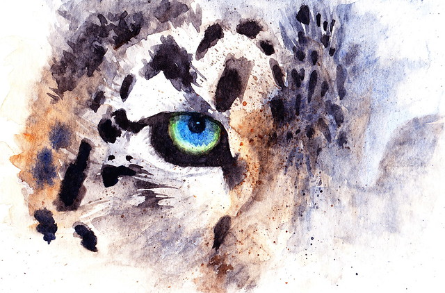 Snow leopard flickr photo sharing