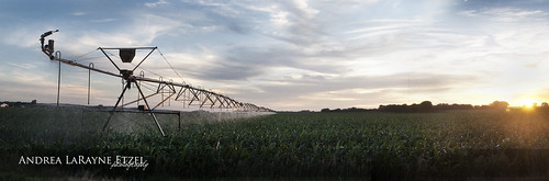 county sunset panorama green nature field rural landscape corn nikon midwest farm pano ks country harvest panoramic heartland kansas agriculture topeka shawnee d5000 andrealarayneetzel