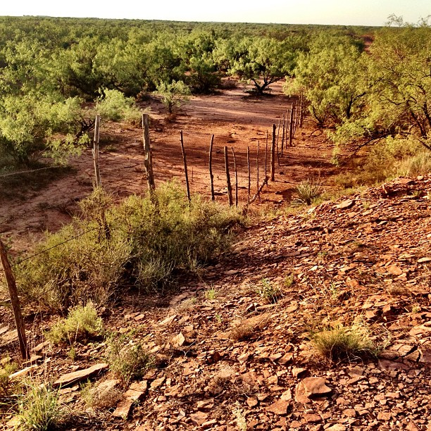 Stamford, Texas ~ Red Dirt #igtexas #texas #rugged #western #summer #hot #heat #desert #scrub #mesquite #landscape #red #barren #lonely #nature #dry