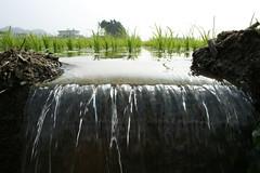 灌溉。李慧宜提供。