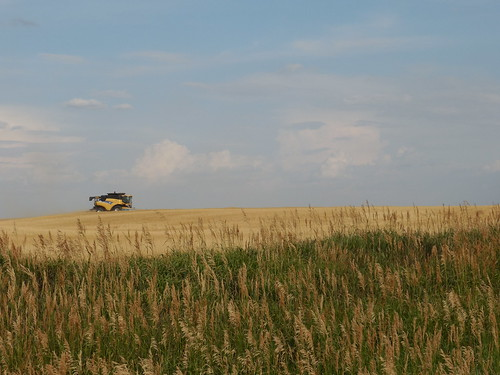View from the road of the CR 9060 and stripper header