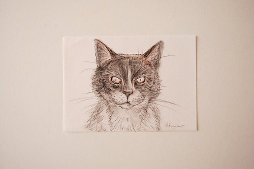 Calico Pencil Drawing