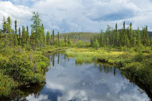 Forêt Boréale en régénération