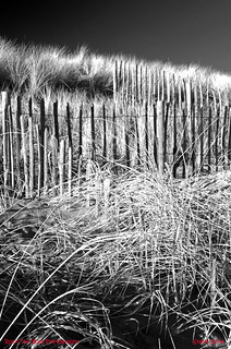 Fences and grass at West Sands - Signed