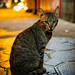 Small photo of Alley cat