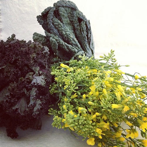 Kale! And kale flowers! And more kale! #sohotrightnow #octfoodphotos 16 | #toomuch? Never. Picked up at @sydneymarkets this morn
