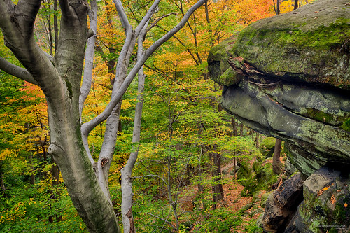 autumn ohio fall rock ledges cuyahogavalleynationalpark cvnp 1740mmf4l autumnlandscapes joshuaclark 5dmkii momentsinnature richieledges overlookledges