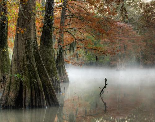 morning autumn mist fall fog mississippi day lochnessmonster cypresstrees jacksonmississippi mayslake mayeslake herowinner ultraherowinner shchofwinner