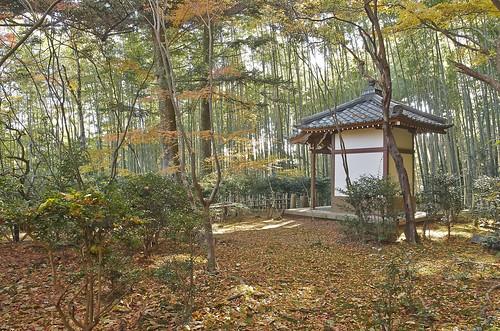 【写真】紅葉 : 滝口寺