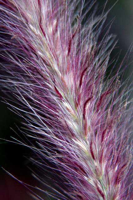 Flor 9
