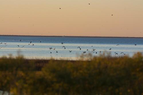 Galveston (30 of 34)