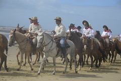 animal sports, equestrianism, western riding, equestrian sport, trail riding, endurance riding, herd, buzkashi,