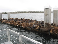 A few extra sea lions... IMG_0043_3