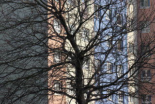 Tree Silhouette Against High Rise Flats