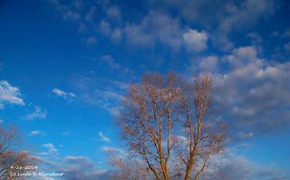 100_9123 - Spring 2014