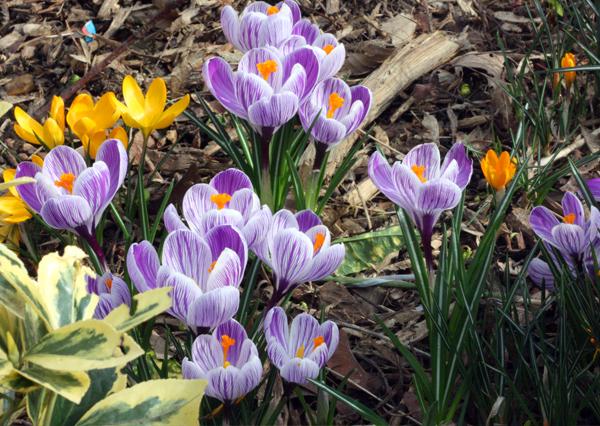 paris, flowers, first spring flowers, פריז, פרחים