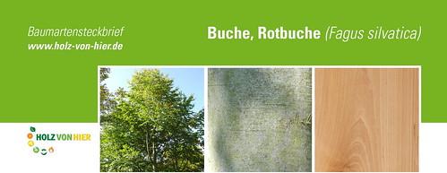 Buche-Header