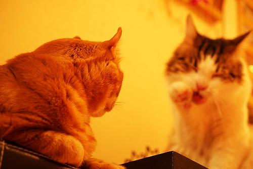 Cat Cafe 01