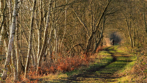 trees nature rural woodland countryside track path somerset lakeside february pathway eveninglight silverbirches eveningsunshine shapwickheath decoylake avalonmarshes decoyhide