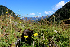 Valle Mirta