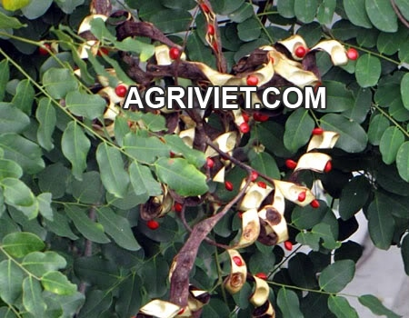 26202173923_14ceae9e67_o.jpg