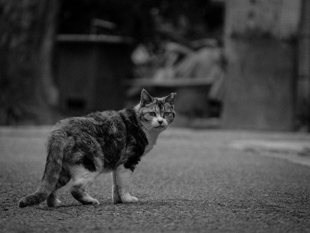 振り向き姿の猫の白黒写真