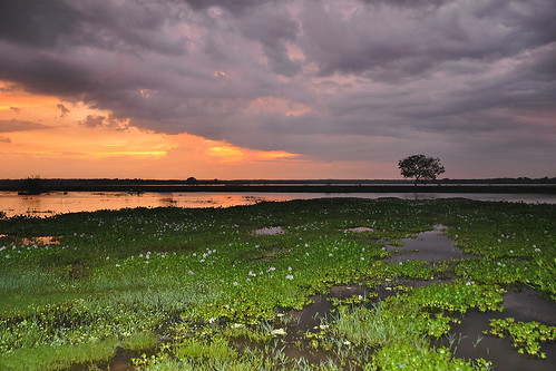 travel blue trees sunset red sea sky cloud lake plant colour tree water field clouds landscape asia purple bright outdoor wetlands serene srilanka ceylon uva grasslands hyacinth southasia uvaprovince weerawilalake