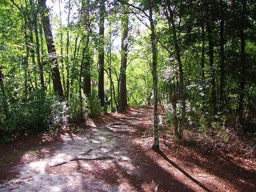 lumberriverstatepark scotlandcounty northcarolina northcarolinadepartmentofparksandrecreation statepark northcarolinastateparks northcarolinastatepark recreation chalkbanks hiking trail path woods forest shadows