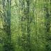 Green Burning by mikuni uehara
