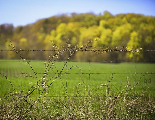 fences ruralontario springphotography 10minutesfromhome nikond800 travelontario ourdailychallenge barbdpics