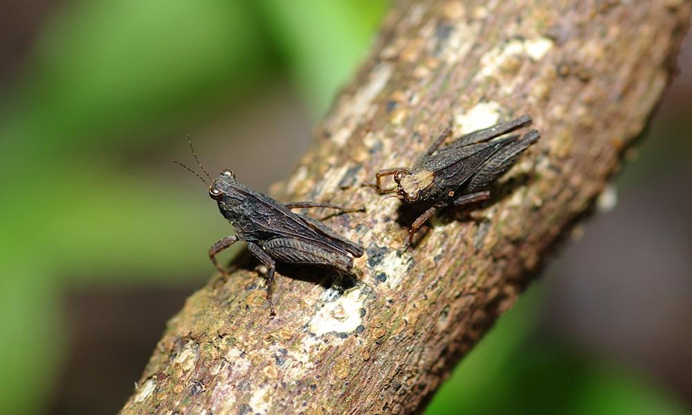 一些小昆蟲