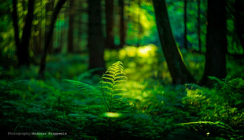 Fairytale Forest by Andreas Krappweis