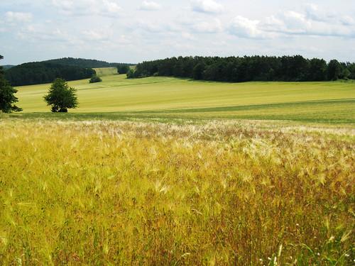 deutschland thüringen camino natur felder deu jakobsweg landschaften ifta