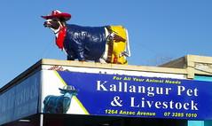 signs around kallangur (11)