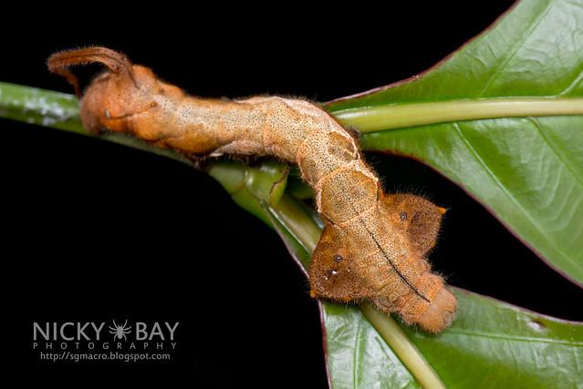 Caterpillar - DSC_3844