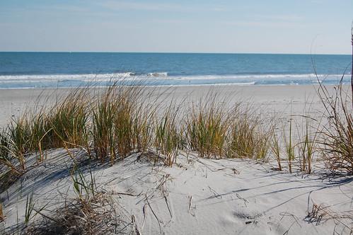 Beach Scene 7277