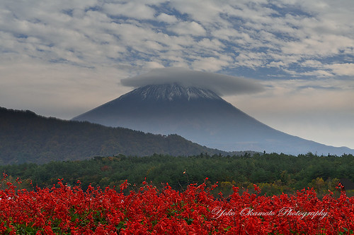 Red sage and Fuji by yoko.wannwannmaru