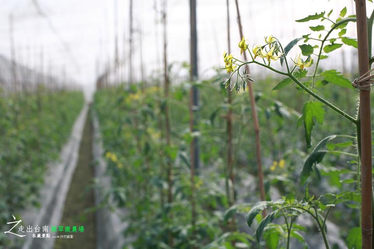 綠翠微農場 (16)