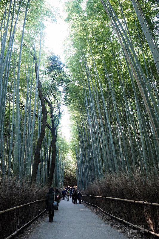 竹林步道 | 嵐山
