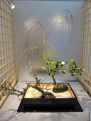 Japanese flower arrangement 58, Ikebana: いけばな