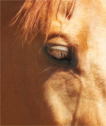 Racehorse, Middleham.