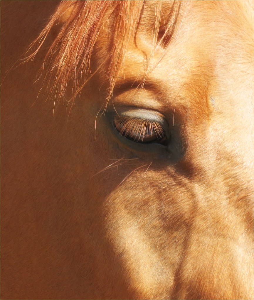 Horse Racing Legends The Video Series - Magazine cover