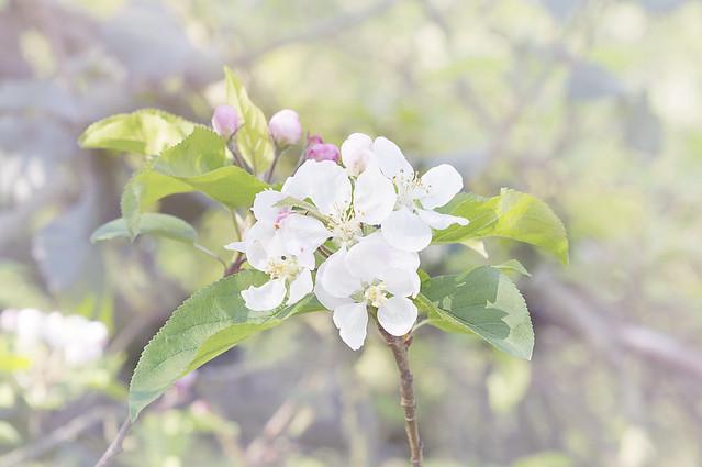 Spring flowers 67 best 30