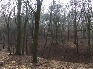 Heuvelachtig bos de Sint-Jansberg
