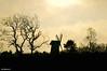 Bidston Hill Winter Sunset
